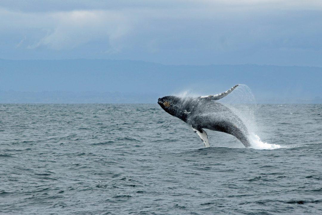 Monterey-bay-whale-watching-california
