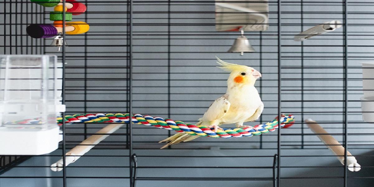 Pássaro em cima de gaiola  Descrição gerada automaticamente com confiança média