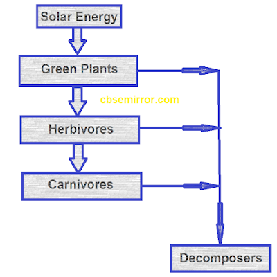 NCERT Solutions For Class 7 Science Chapter 1 - Nutrition in Plants