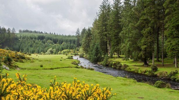 Bellever/Riddon Ridge on Dartmoor