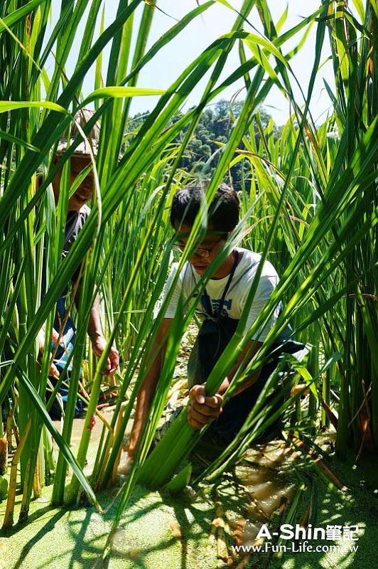 桃米休閒農業區19