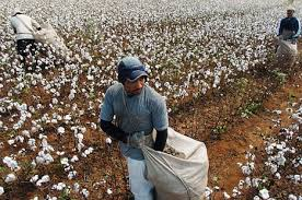 Image result for slave labor