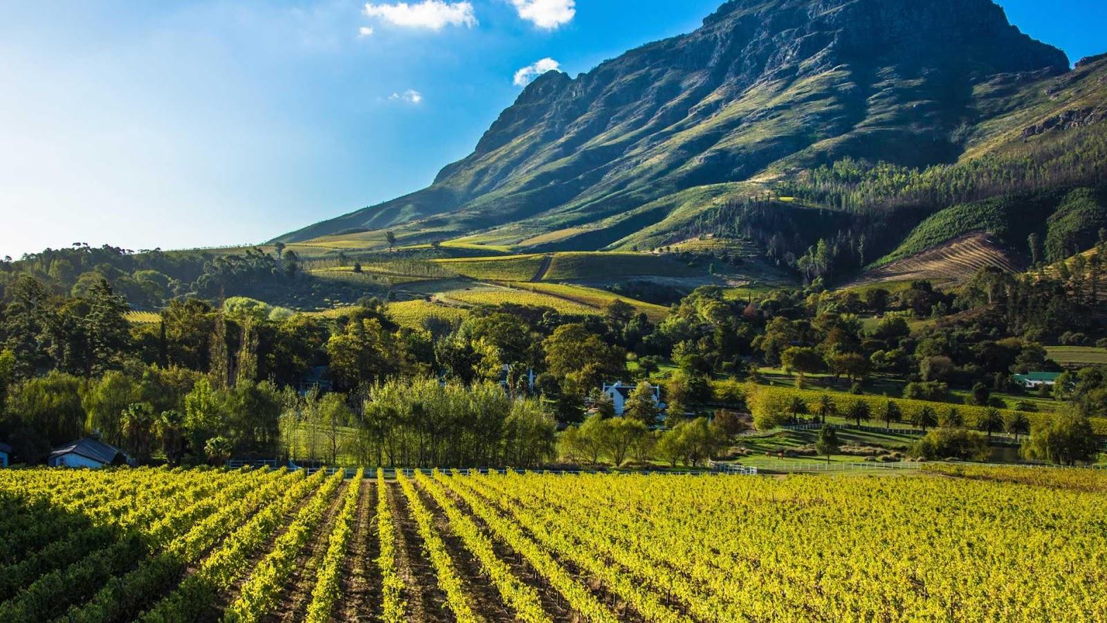 Stay, Eat, Do: The Hidden Gems of Stellenbosch