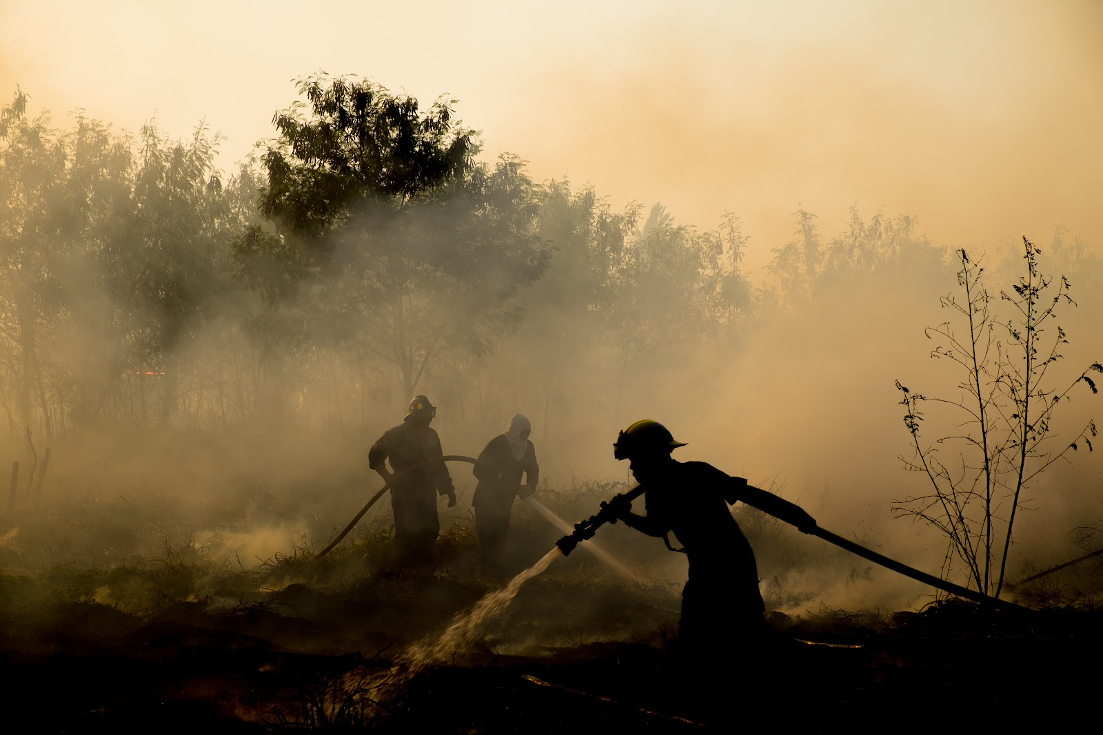 Fire fighters in a forest fire, smoke, natural disaster