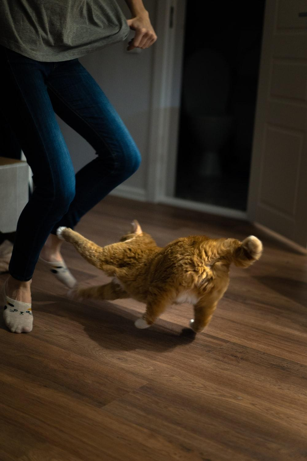 person standing in front of orange cat