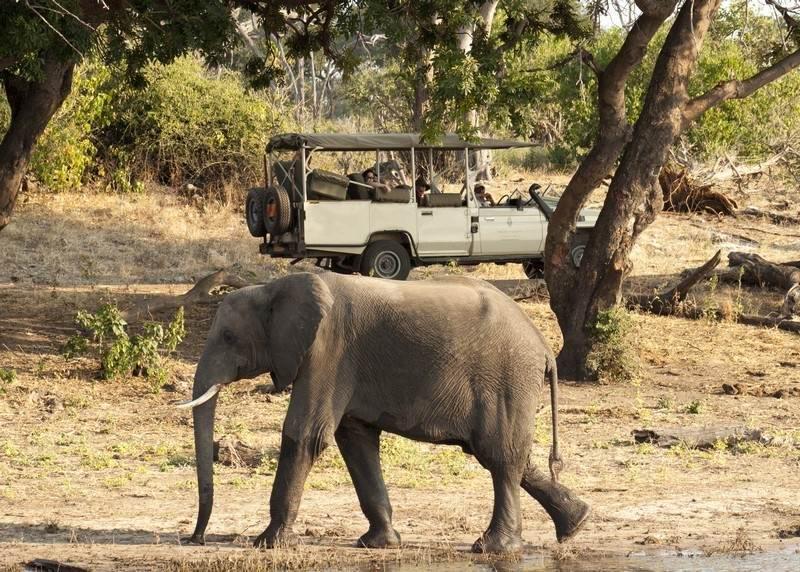 Chobe-game-drive-elephant.jpg
