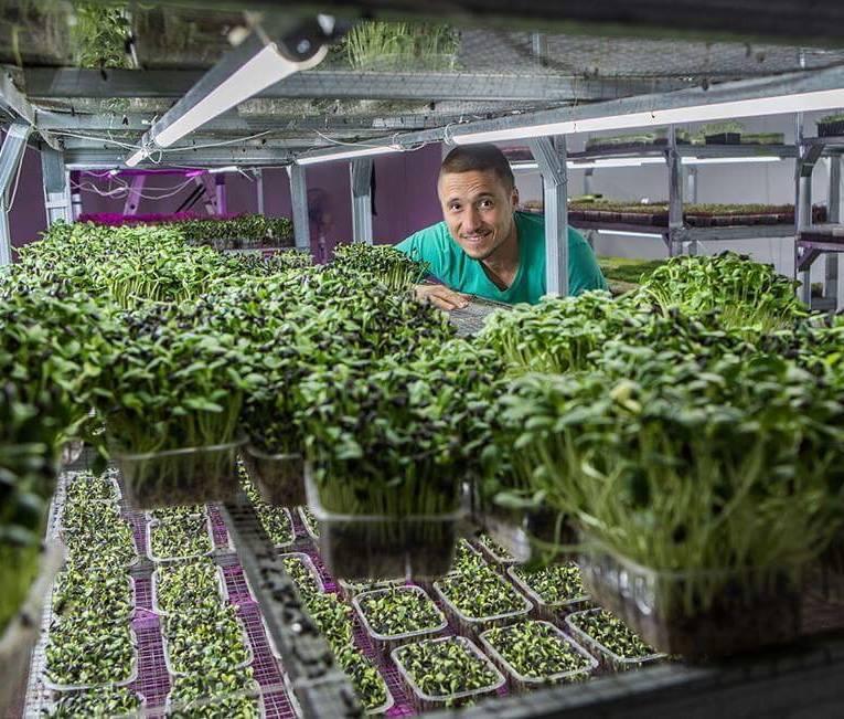 Бизнес на траве. Как одессит стал гуру урбан-фермерства и учит этому всех желающих