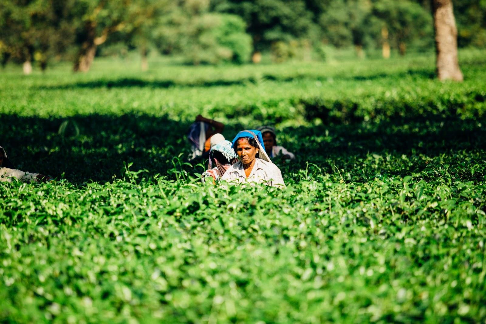 Agricultura impulsionou geração de empregos no agronegócio (Fonte: Pexels)