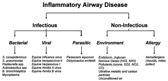 Proposed etiological agents of lower airway inflammation in young racehorses (IAD).
