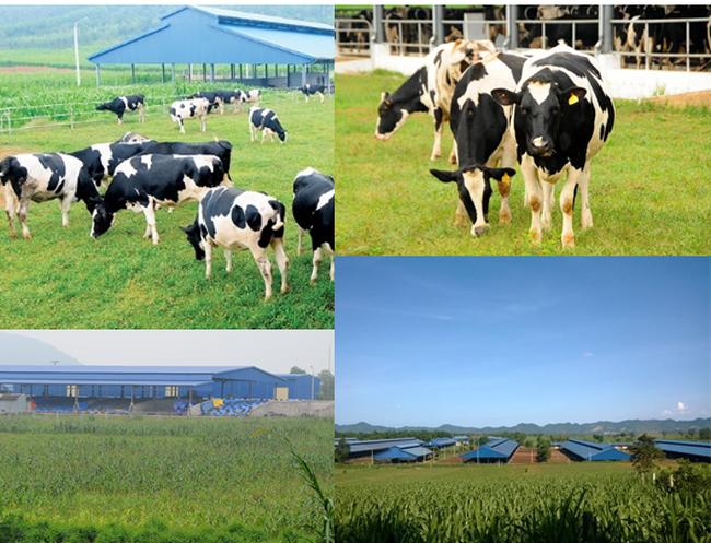 Các chuyên gia nói gì về nền nông nghiệp công nghệ cao?