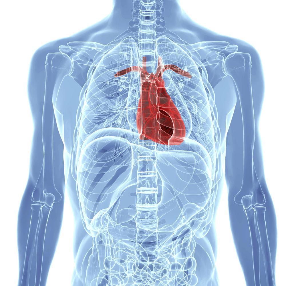 human-body-anatomy.jpg