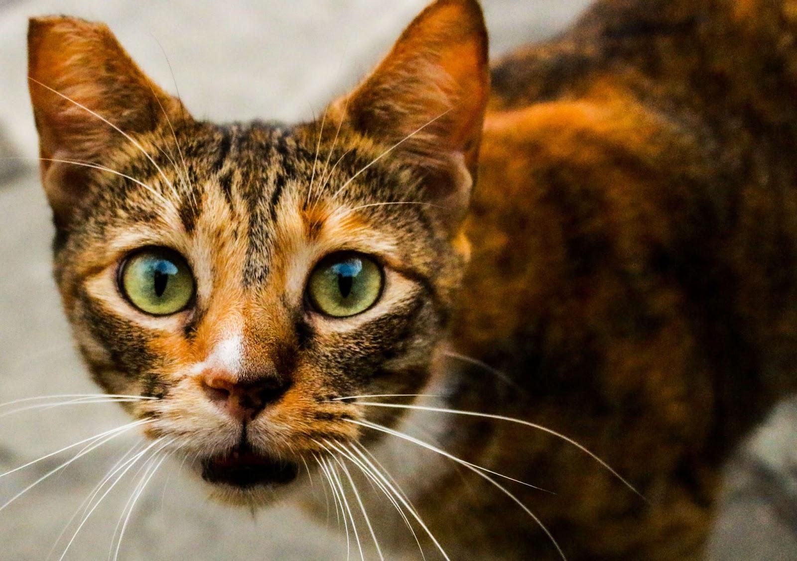 What Does It Mean When A Stray Cat Comes To Your House?