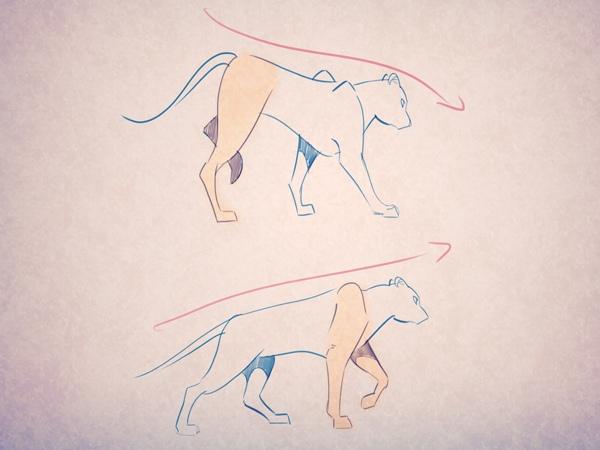 Посмотрите вверху, как ведут себя передние и задние лапы в стадии переноса тела: голова слегка опускается вниз, когда задняя нога переносится вперед. Обратное происходит во время переноса передней лапы.