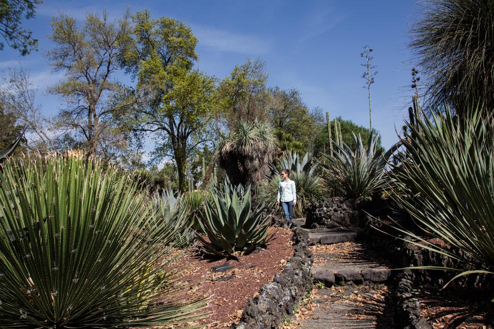 Jardin Botanico UNAM 1.png