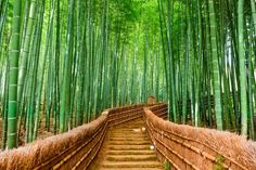 Bamboo forest Kyoto wallpaper from Happywall #wallpaper #green #wallmural #happywall #wallpapers #wallmurals