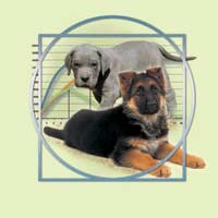 The growth phase of large-breed and giant-breed puppies is an important period