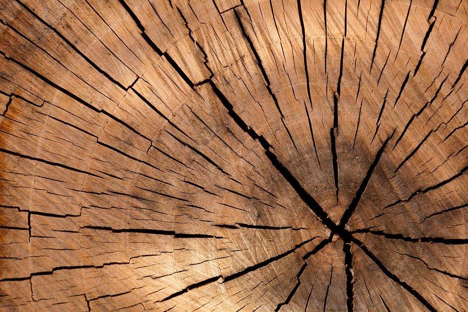 Wie viel Holz wird in Deutschland pro Jahr verbraucht?