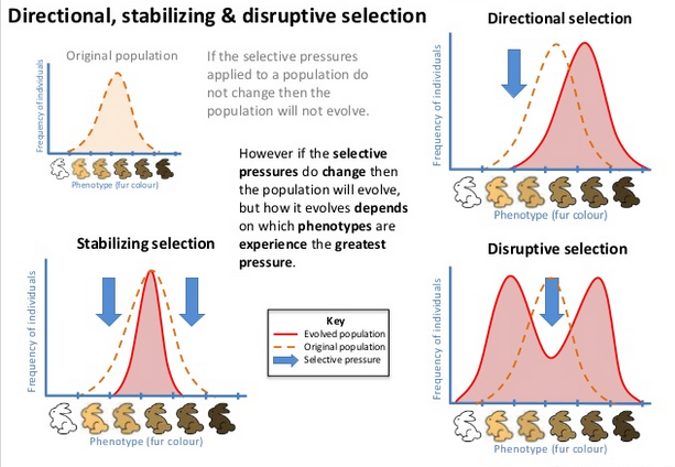 Disruptive Selection Example Image Collections Example Cover
