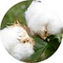 El algodón de la Almohada Royal Velfont