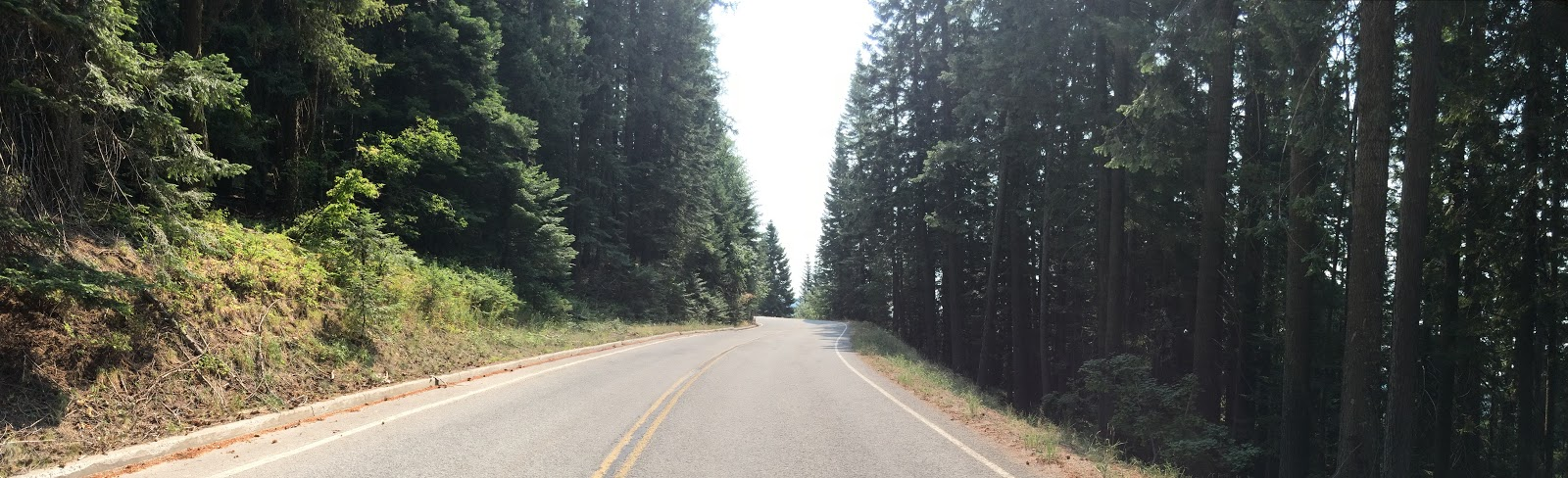 Cycling Mt. Spokane Park Drive - roadway surrounded by forest