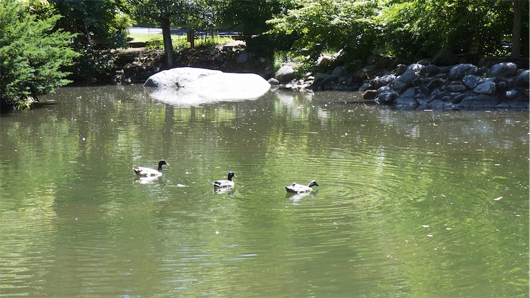 Water Fowl.jpg