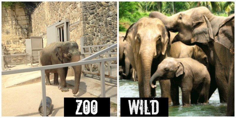 should we keep animals in zoo Animals kept in an improper environment or fed the wrong diet can suffer, resulting in illness or death in some environments, we believe it's best not to keep certain wild animals at all, as their needs cannot be met - particularly if the.