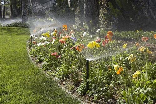 đầu tưới hunter spray sử dụng tưới tự động cho trồng hoa mười giờ