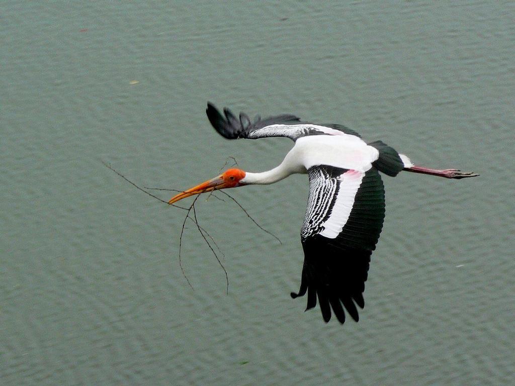 Vendanthangal bird sanctuary