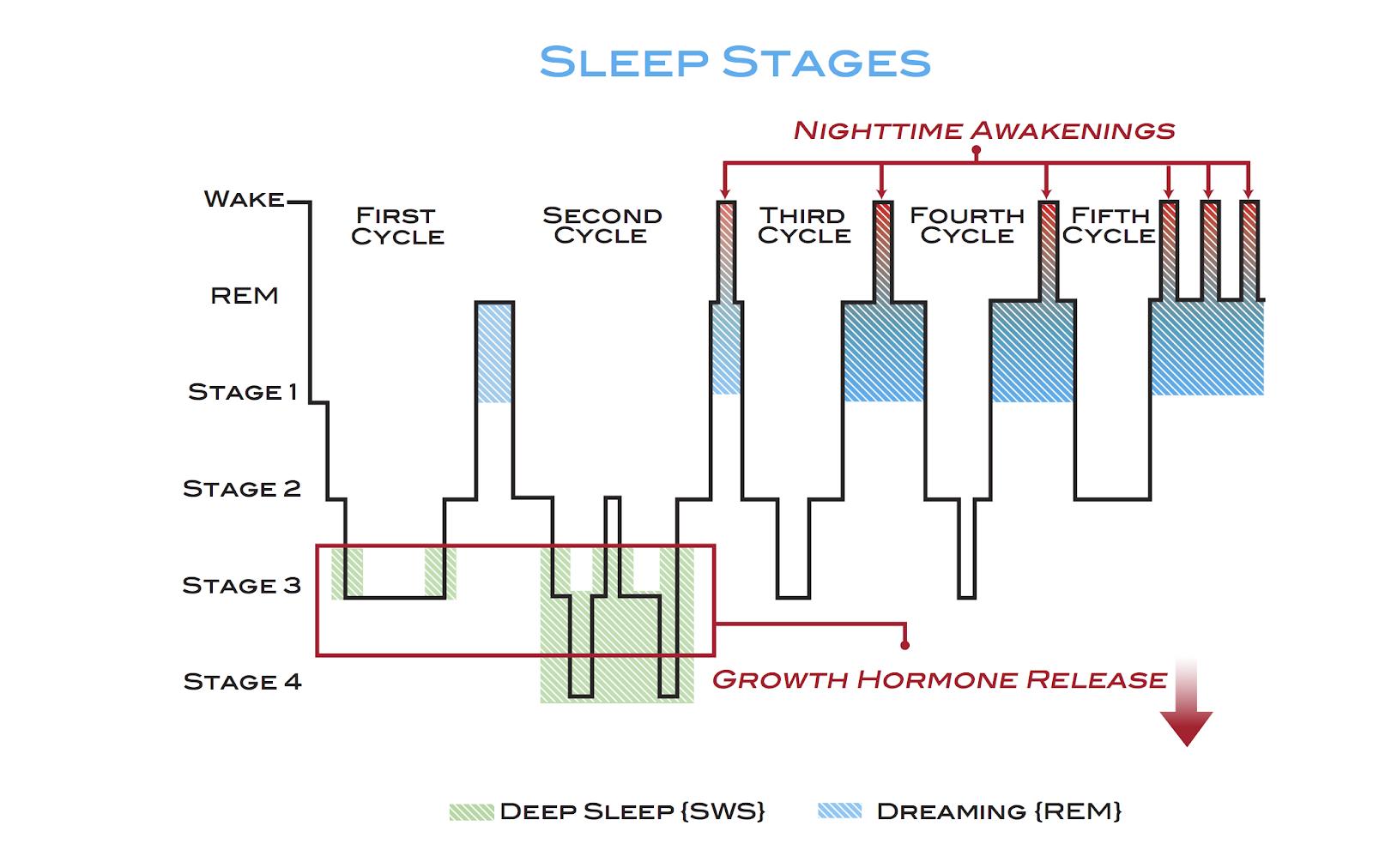 Hipnograma: Fases del sueño.
