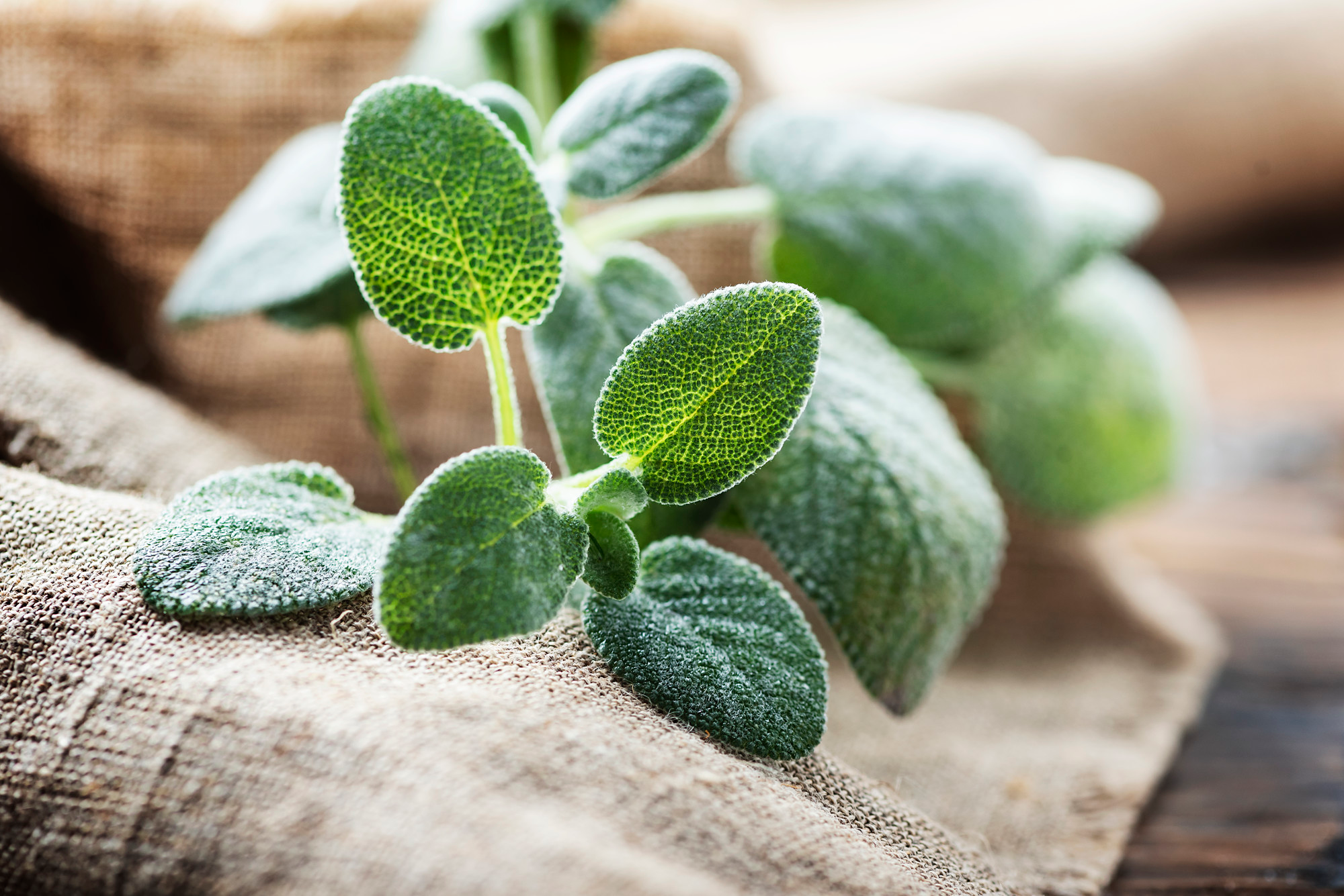 sage for memory, sage for memory enhancement