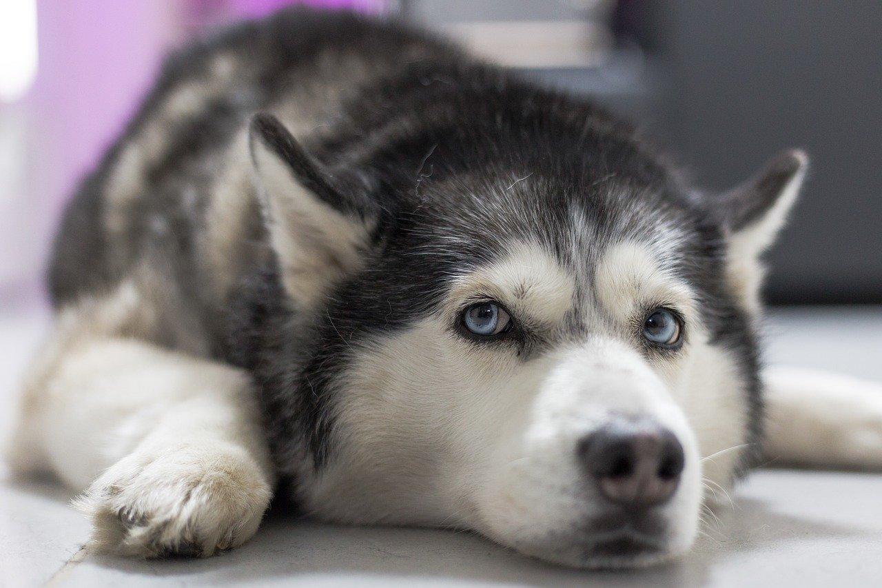 Dog Grooming  - How to Minimize Dog Shedding