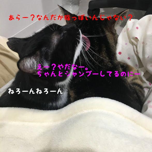 猫の体と尻尾がベトベトになるスタッドテイル症とは?予防方法や原因 治療法について