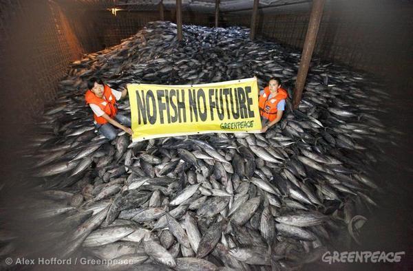 Illegal Pacific Tuna Transhipment. 11/14/2012 © Alex Hofford / Greenpeace