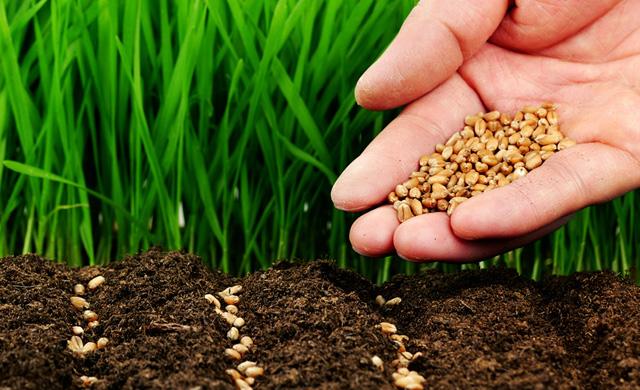 проблемы воссоздания плодородия почв