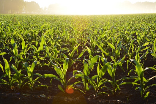 How Can Agriculture in Northumberland County Help My Business