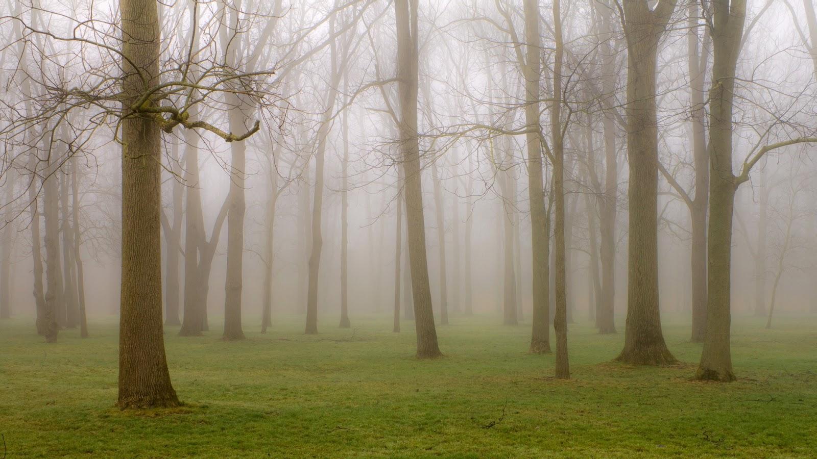 68736036-gorgeous-fog-wallpapers.jpg