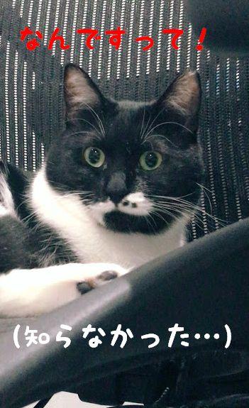 意外と知らない猫の目の仕組み・特徴とは