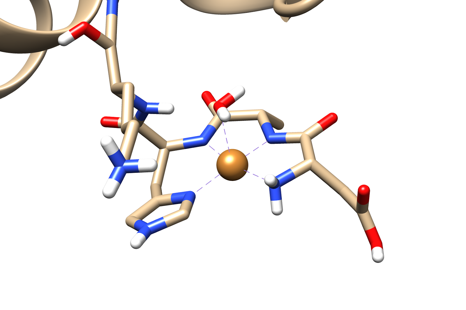 Cu(II)bindingsite.png