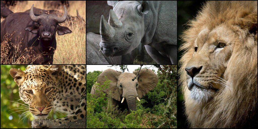 Tanzania The big five tourism