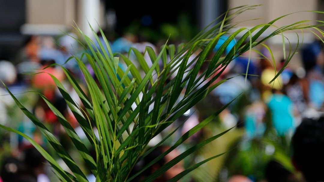 palm branches on Palm Sunday - Holy Week for kids