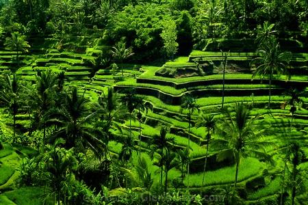 Bali-0-033.jpg