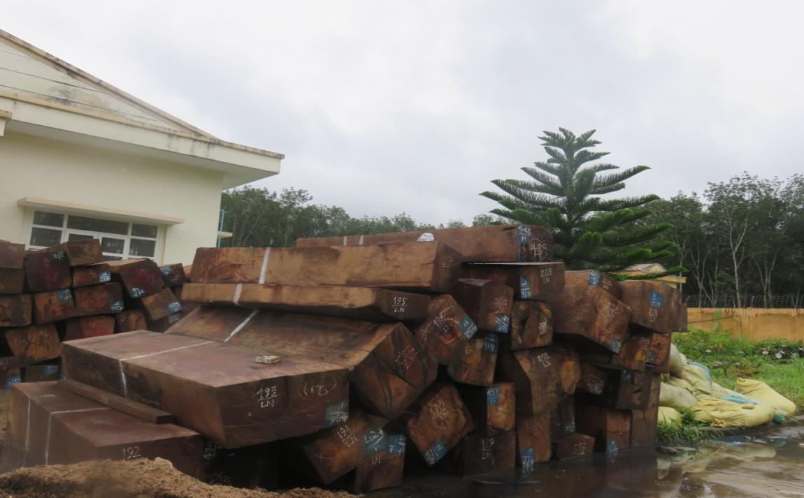 Thu giữ nhiều tấn mủ cao su và gỗ không có hoa đơn, chứng từ hợp pháp