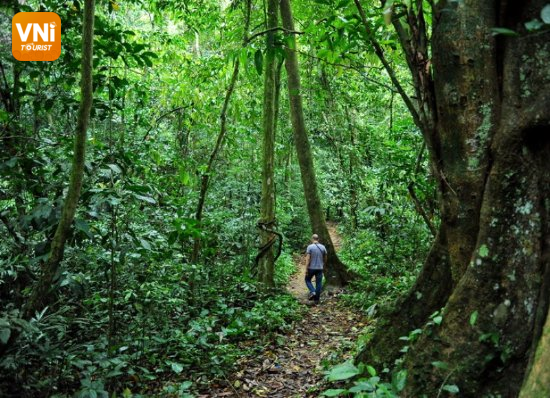 best time to travel to Cuc Phuong national park