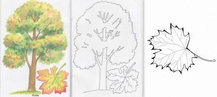 Друзья БабочкиЯночки: Изучаем деревья, листья и краски ...