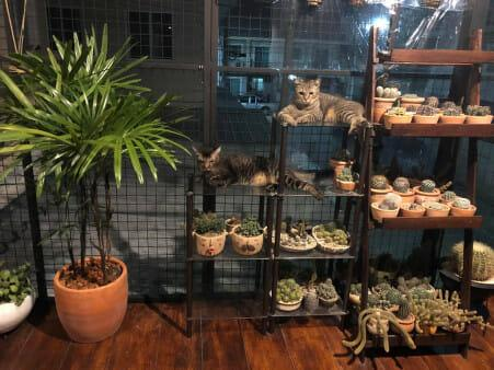 植物和楼梯都被屋主加到这猫咪天堂里