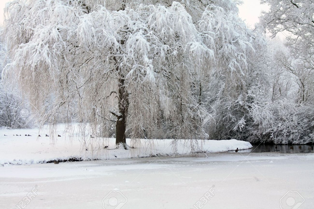 6230105-A-winter-forest-with-frozen-trees-and-an-icy-pond-with-ducks-Stock-Photo.jpg