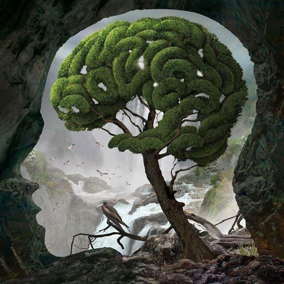 brain tree / arbol cerebro