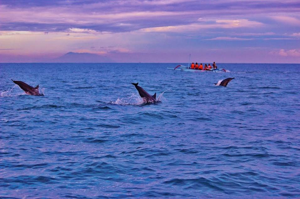 dolphins at lovina Beach Bali