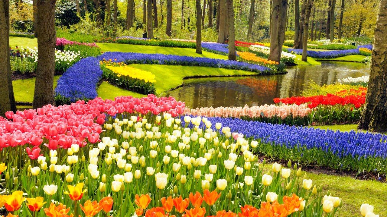 Фестиваль Тюльпанов в Турции фото