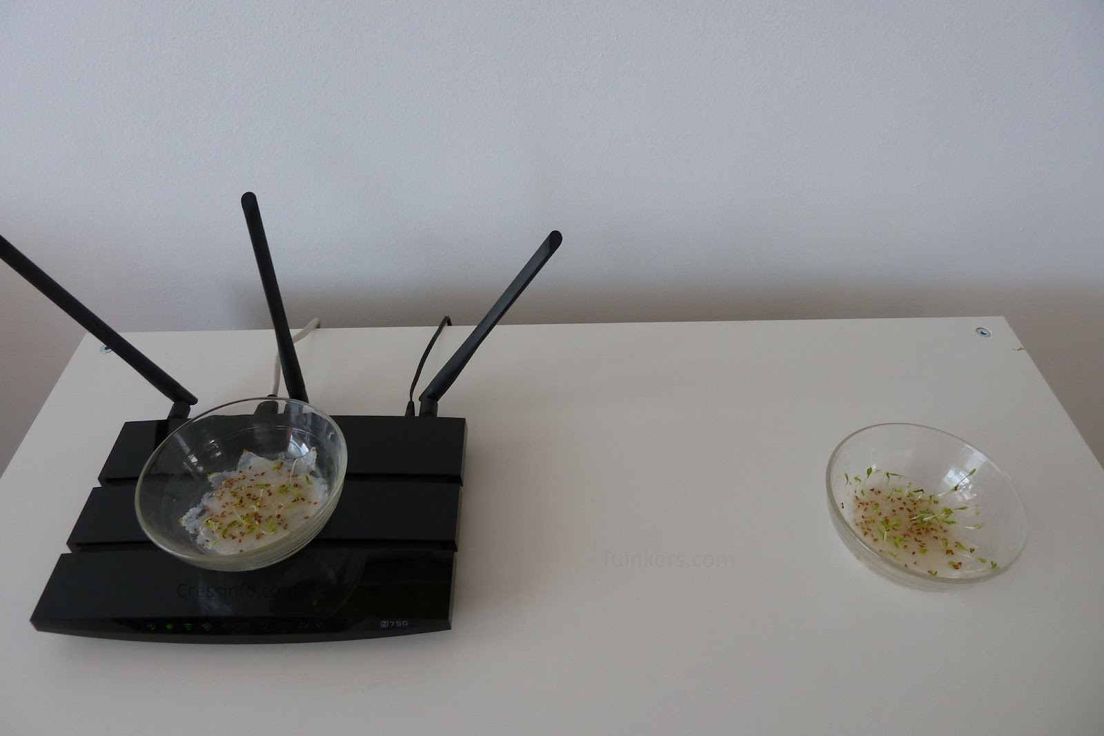 Wifi experiment on cress growth - Cressinfo.com